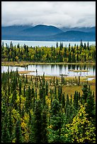 Forest in fall foliage, Beaver Pond and Lake Clark. Lake Clark National Park ( color)