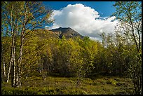 Tanalian Mountain framed by trees in fall foliage. Lake Clark National Park ( color)