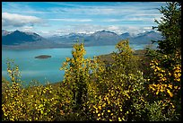 Trees in fall foliage and Lake Clark. Lake Clark National Park ( color)