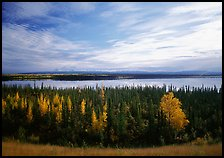 Forest, Willow Lake, and Wrangell range in the distance. Wrangell-St Elias National Park ( color)