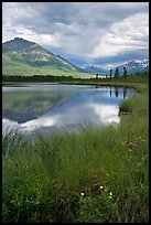 Flowers, grasses, lake, and mountains. Wrangell-St Elias National Park ( color)