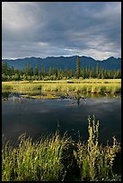 Pond, tundra and mountains. Wrangell-St Elias National Park ( color)