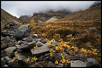 Rocks and tundra with shrubs in autumn colors, Skookum Volcano. Wrangell-St Elias National Park ( color)