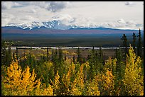 Trees in autumn foliage, Copper River, and Mount Blackburn. Wrangell-St Elias National Park ( color)