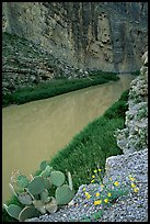Flowers, cactus, and Rio Grande in Santa Elena Canyon. Big Bend National Park, Texas, USA. (color)