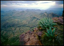 Agave plants overlooking desert mountains from South Rim. Big Bend National Park, Texas, USA. (color)