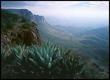 Agaves on South Rim, morning. Big Bend National Park, Texas, USA. (color)