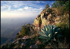Agave and cliff, South Rim, morning. Big Bend National Park, Texas, USA. (color)