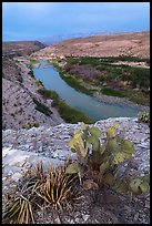 Cactus and Rio Grande Wild and Scenic River. Big Bend National Park, Texas, USA. (color)