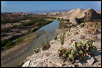 Cactus and Rio Grande River, morning. Big Bend National Park, Texas, USA. (color)