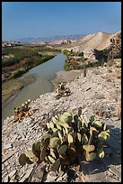 Cactus, Ocotillo, Rio Grande River, morning. Big Bend National Park, Texas, USA. (color)