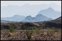 Desert and hazy Chisos Mountains. Big Bend National Park, Texas, USA. (color)