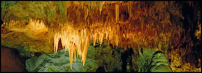 Cave roof with stalactites in Big Room. Carlsbad Caverns National Park (Panoramic color)