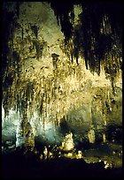 Fine Stalactites growing from ceiling of Papoose Room. Carlsbad Caverns National Park ( color)