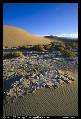 Mud formations in the Mesquite sand dunes, early morning. Death Valley National Park, California, USA.