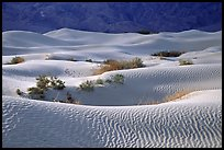 Mesquite Sand Dunes, morning. Death Valley National Park ( color)