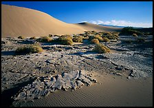 Mud formations in the Mesquite sand dunes, early morning. Death Valley National Park ( color)