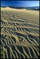 Ripples on Mesquite Sand Dunes, early morning. Death Valley National Park ( color)