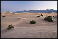 Sand dunes and mesquite bushes, dawn. Death Valley National Park, California, USA.