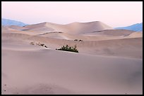 Mesquite sand dunes at dawn. Death Valley National Park ( color)