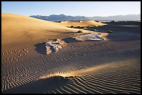 Depression in dunes with sand ripples, Mesquite Sand Dunes, early morning. Death Valley National Park ( color)