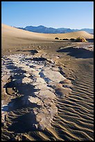 Cracked mud and sand ripples, Mesquite Sand Dunes, early morning. Death Valley National Park ( color)