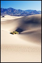 Depression in sand dunes, morning. Death Valley National Park ( color)