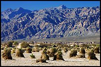 Devil's cornfield and Armagosa Mountains. Death Valley National Park ( color)
