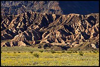 Yellow wildflowers and buttes, late afternoon. Death Valley National Park, California, USA. (color)