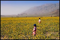 Children in a carpet of Desert Gold near Ashford Mill. Death Valley National Park, California, USA. (color)