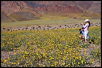 Couple videotaping and photographing in a field of Desert Gold near Ashford Mill. Death Valley National Park, California, USA. (color)