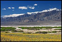Yellow blooms, creek, and Panamint Range, morning. Death Valley National Park ( color)