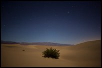 Mesquite bush in sand dunes at night. Death Valley National Park ( color)