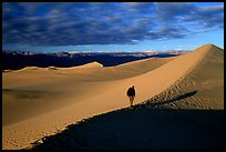 Hiking towards tall dune, the Mesquite Dunes, sunrise. Death Valley National Park, California, USA. (color)