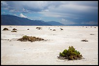 Shrubs on Salt Pan. Death Valley National Park ( color)