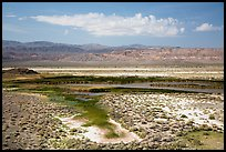 Wetlands, Saragota Spring. Death Valley National Park ( color)