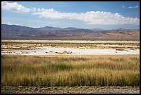 Salt Pan and riparian area, Saragota Springs. Death Valley National Park ( color)
