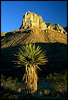 Yucca and El Capitan, early morning. Guadalupe Mountains National Park, Texas, USA. (color)