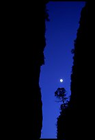 Tree and moon at night through the narrow canyon of Devil's Hall. Guadalupe Mountains National Park ( color)