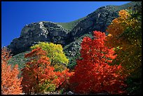 Trees in autumn foliage and cliffs,McKittrick Canyon. Guadalupe Mountains National Park, Texas, USA.