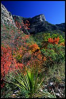 McKittrick Canyon in the fall. Guadalupe Mountains National Park ( color)