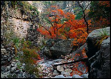 Limestone cliffs and trees in autumn color near Devil's Hall. Guadalupe Mountains National Park ( color)