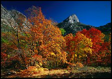 Fall foliage and cliffs, McKittrick Canyon. Guadalupe Mountains National Park ( color)