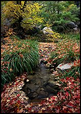 Stream in fall, Smith Springs. Guadalupe Mountains National Park ( color)