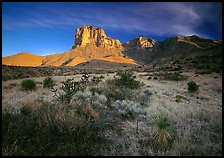 Desert vegetation and El Capitan from Guadalupe pass, morning. Guadalupe Mountains National Park, Texas, USA.