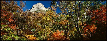 Forest in autumn color and rocky peak. Guadalupe Mountains National Park (Panoramic color)