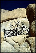 Bare bush and rocks in Hidden Valley. Joshua Tree National Park, California, USA.