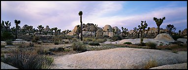 Granite slabs and boulders with Joshua Trees. Joshua Tree  National Park (Panoramic color)