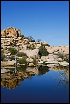 Photographer at Barker Dam. Joshua Tree National Park, California, USA. (color)