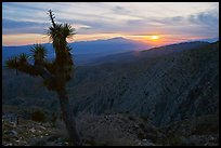 Yucca at sunset, Keys View. Joshua Tree National Park, California, USA. (color)